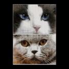 borduurpakket cats, smokey&blu